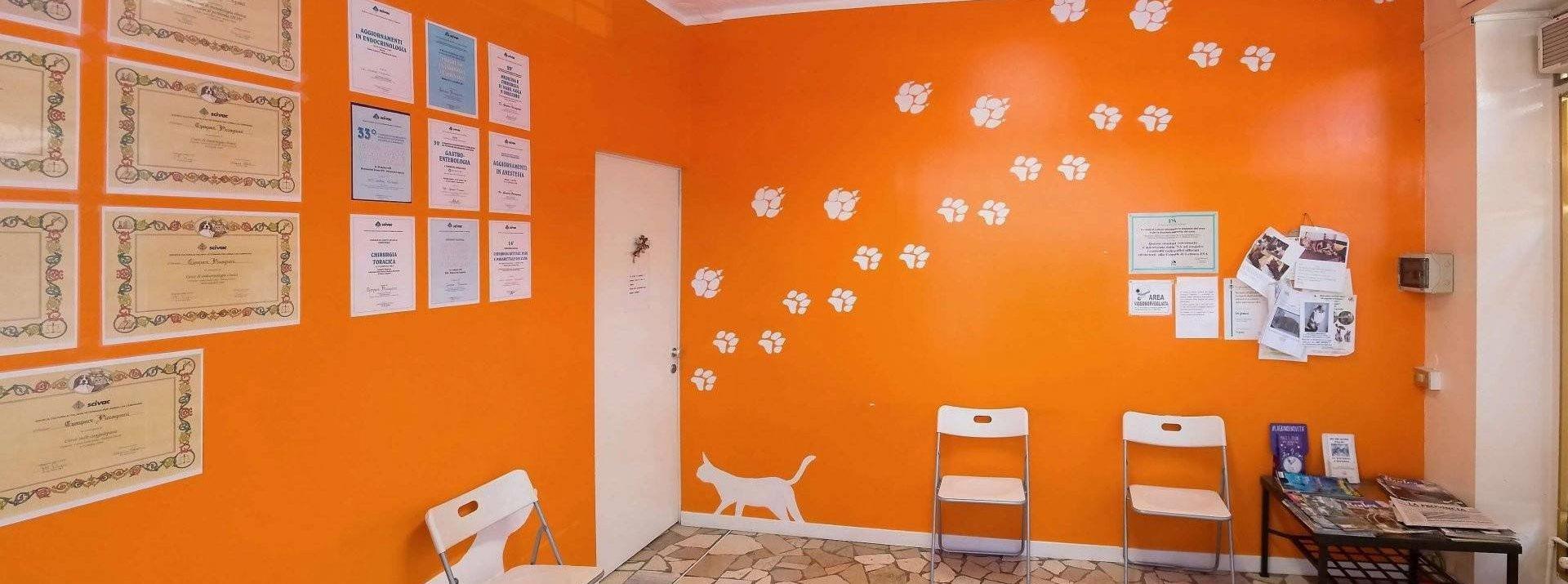 veterinario piccagnoni home